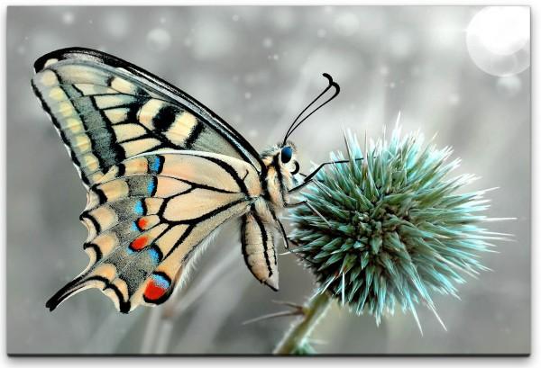 Schmetterlinge Wandbild in verschiedenen Größen