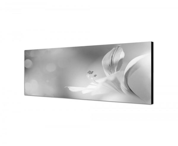 150x50cm Blüten Blumen Farbfilter abstrakt